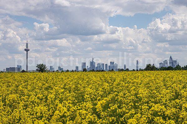 Die Frankfurter Skyline (21.05.2021)