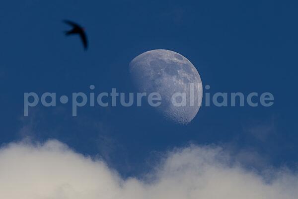 Zunehmender Mond am Abendhimmel (21.05.2021)
