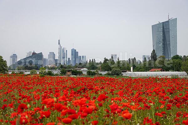 Frankfurt am Mohn (09.06.2021)