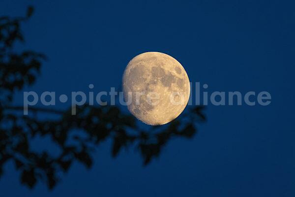 Mond auf einem Ast (21.07.2021)