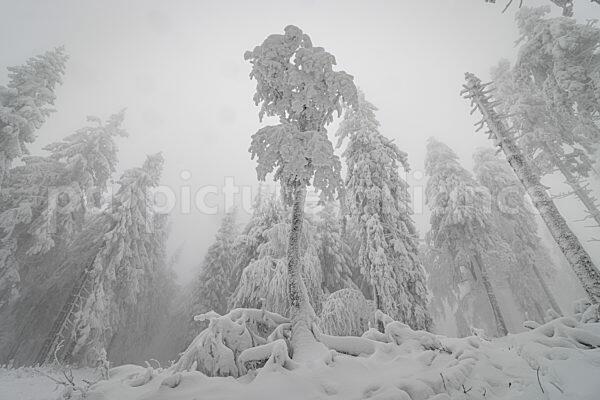 Winterlandschaft am Grossen Feldberg im Taunus (04.01.2021)